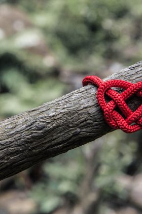 love knot tree branch