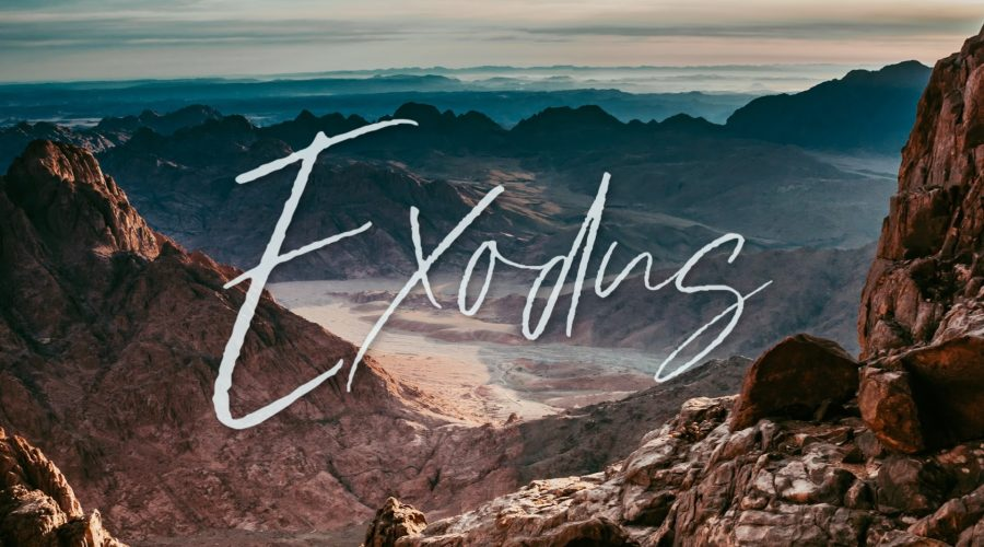 Exodus: Rigid